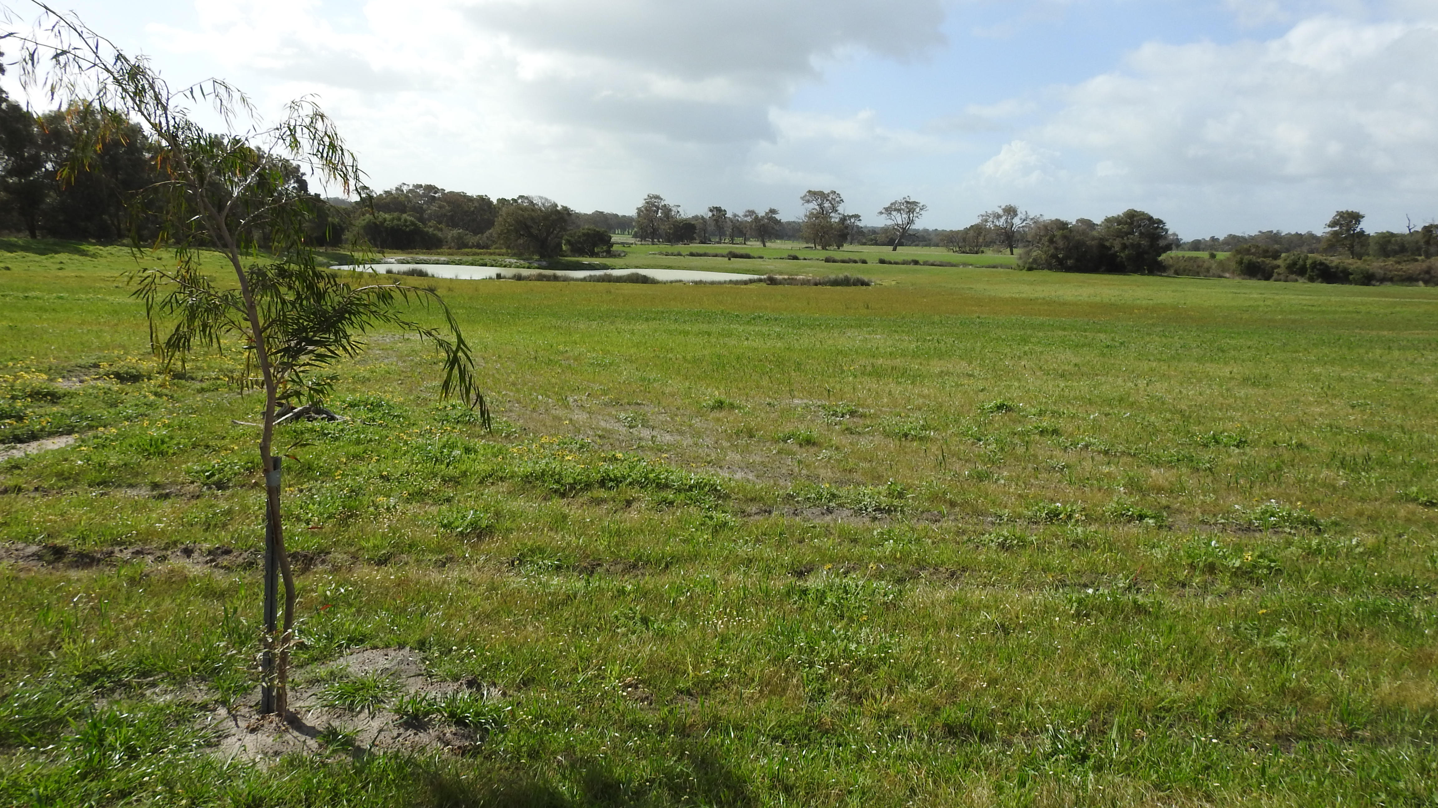 Proposed Lot 41 Haag Road Yelverton -  For Sale - 22492048 - Acton Southwest
