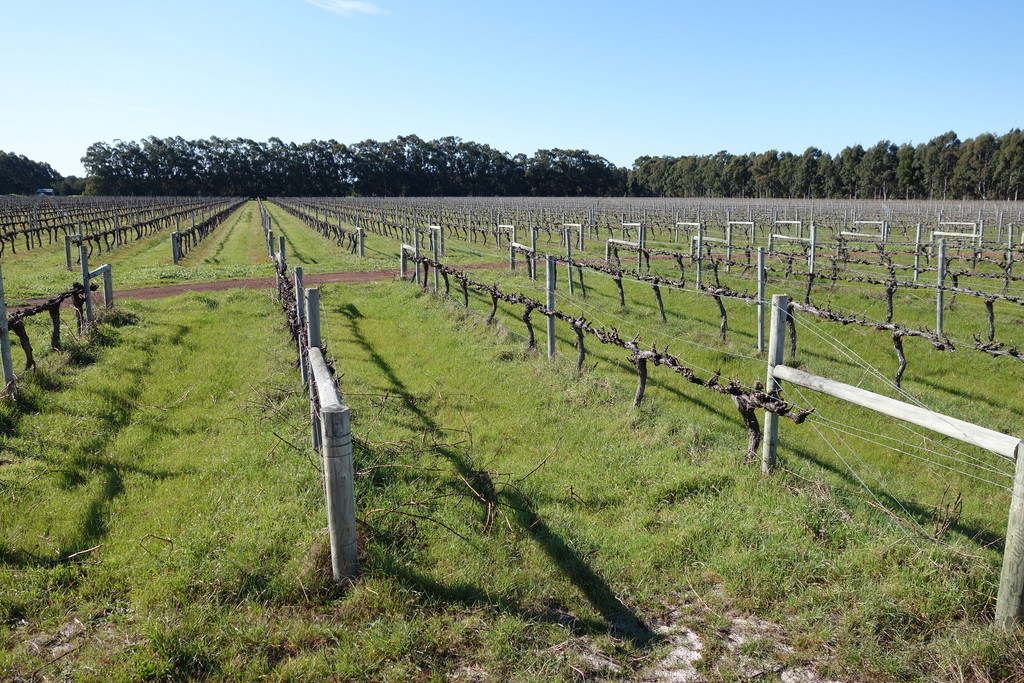 Lot 26 Caves Road Wilyabrup - Viticulture For Sale - 8547816 - ACTON South West
