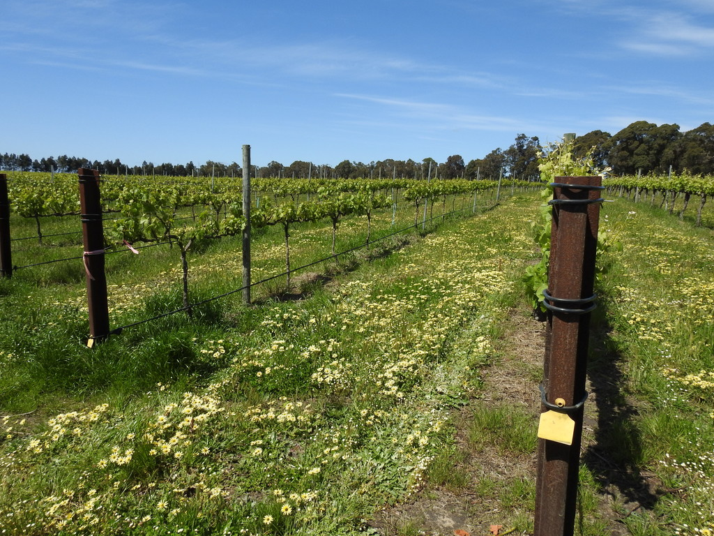 Metricup - Viticulture For Sale - 18076025 - ACTON South West