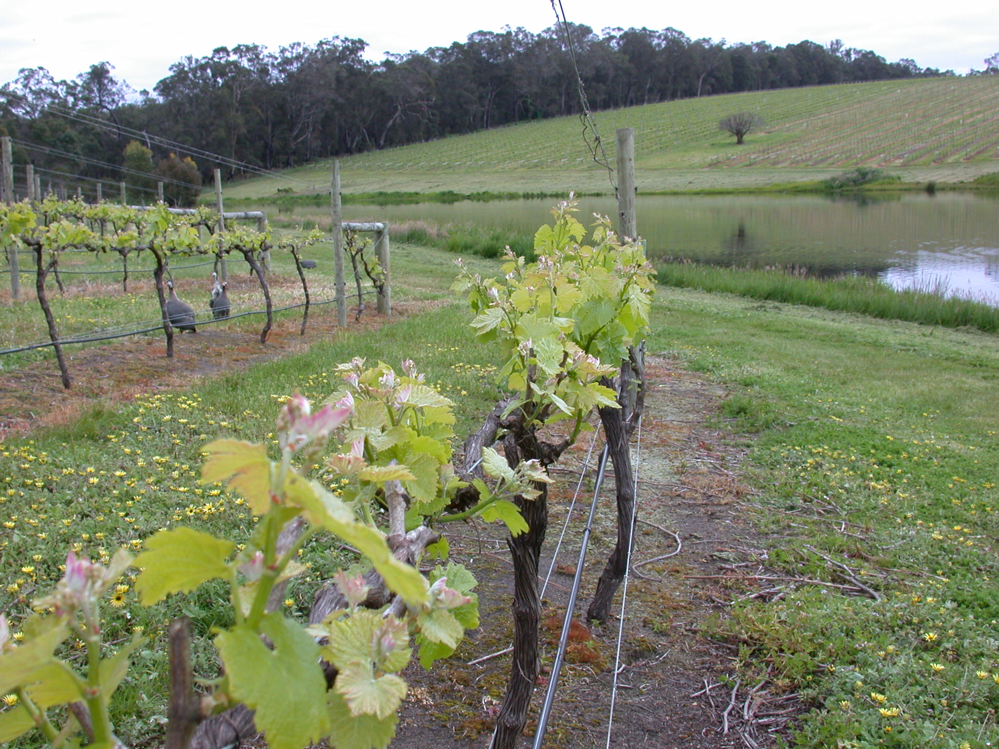 Rosa Glen - Viticulture For Sale - 17518362 - ACTON South West
