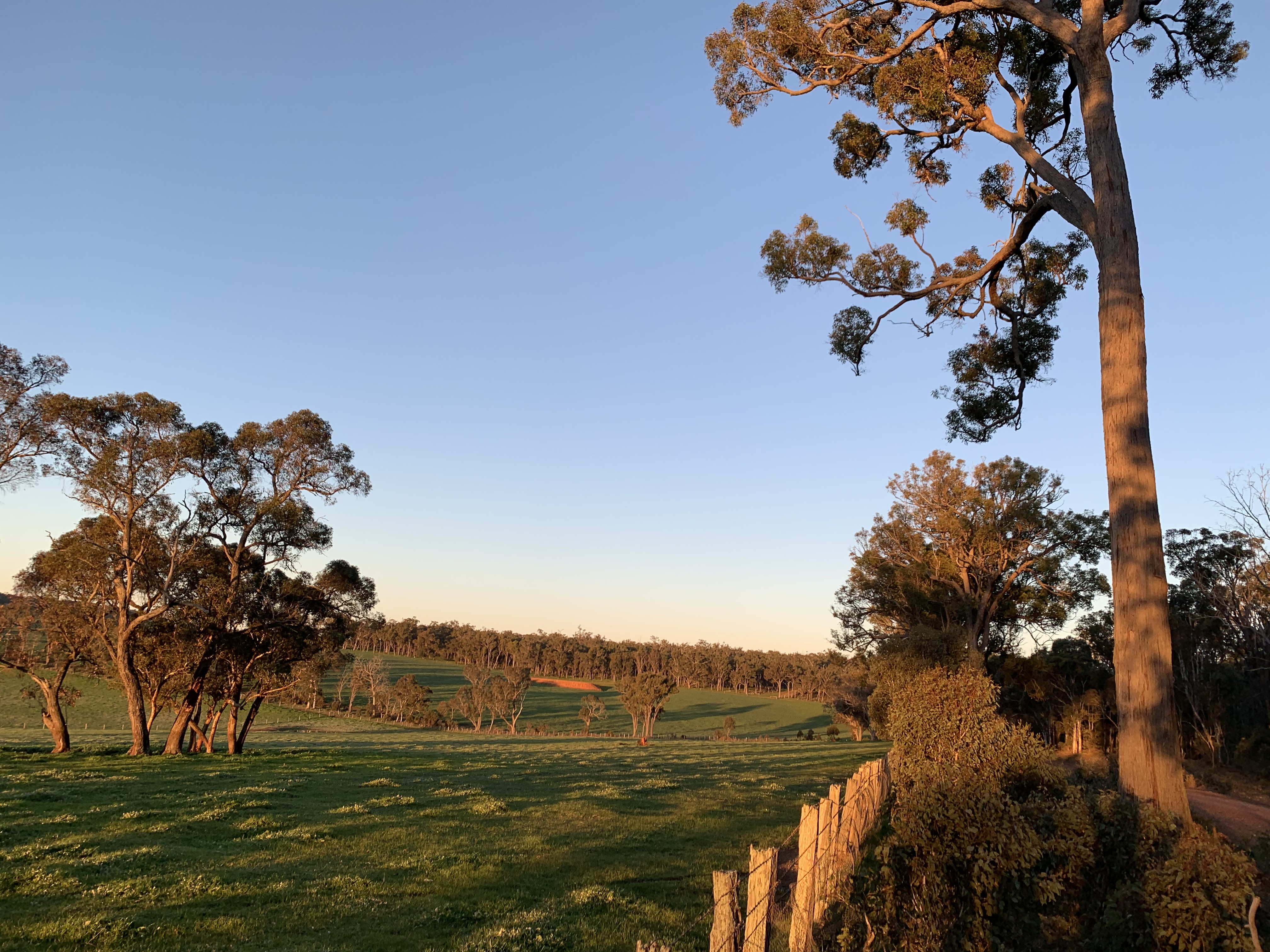 Lot 11724 Junction Road Manjimup - Other For Sale - 21390190 - Acton Southwest