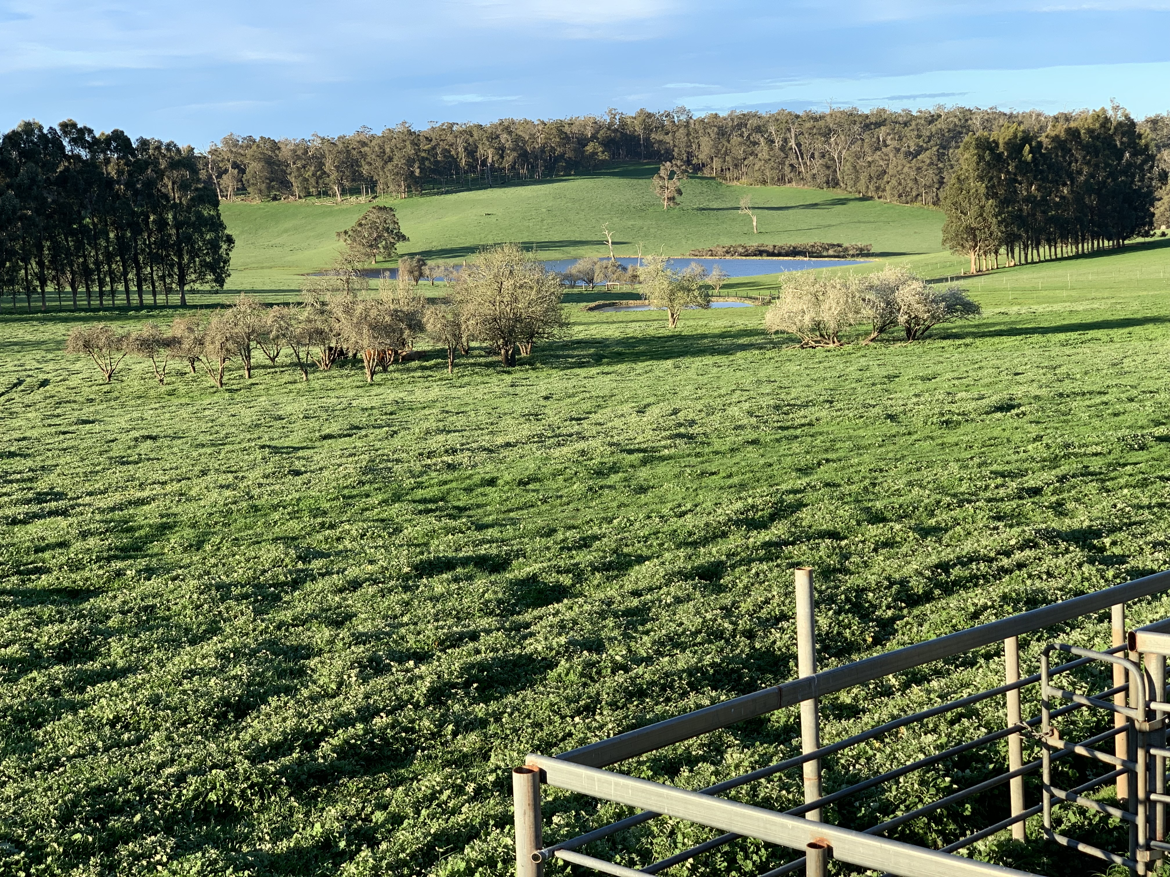 Glenfield Farm Edwards Road (Perup) Manjimup - Other For Sale - 21690006 - Acton Southwest