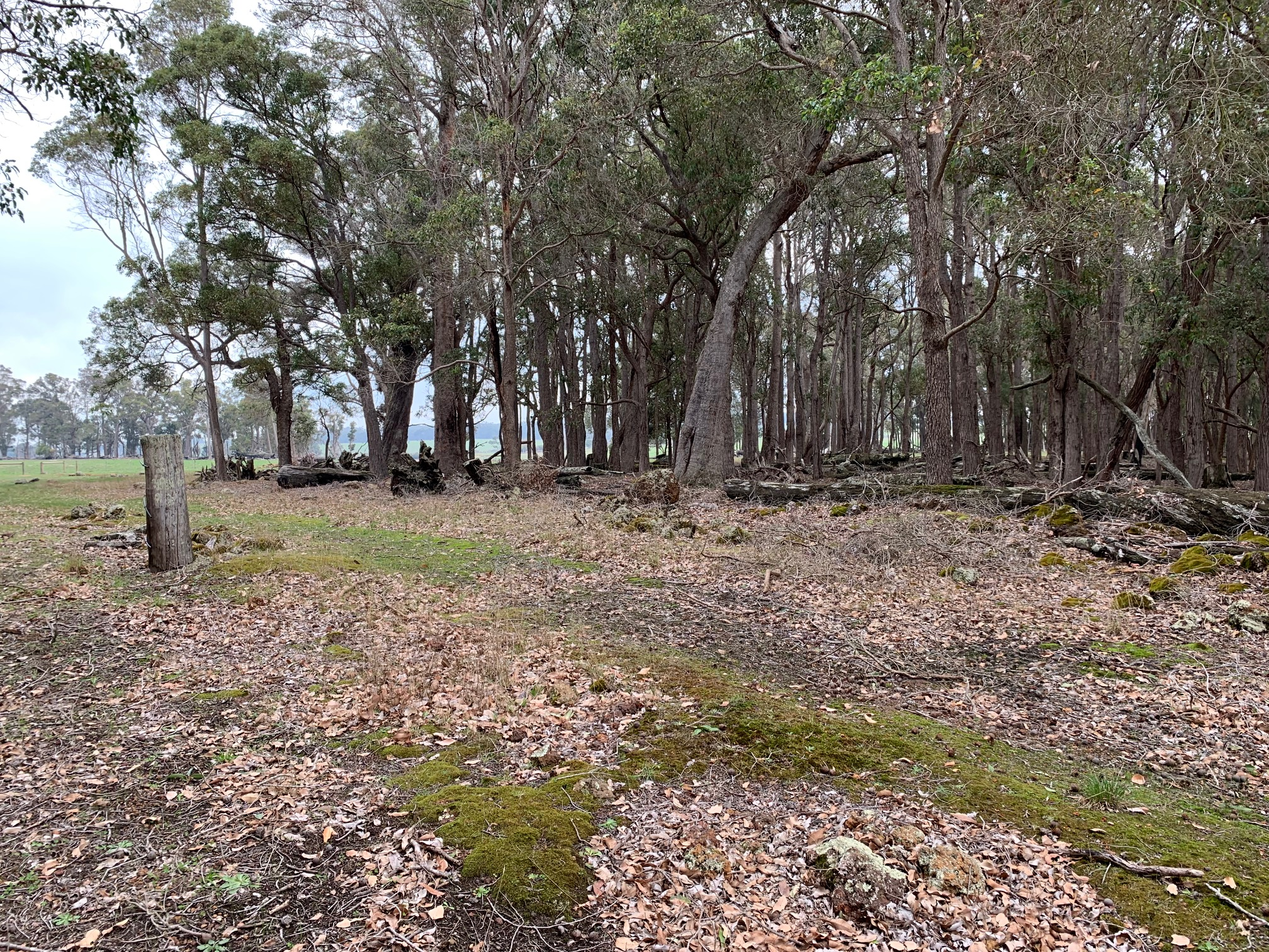 Lot 102 Bessell Road Rosa Brook -  For Sale - 20910324 - ACTON South West