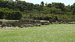 Property in YELVERTON, Proposed Lot 41 Haag Road