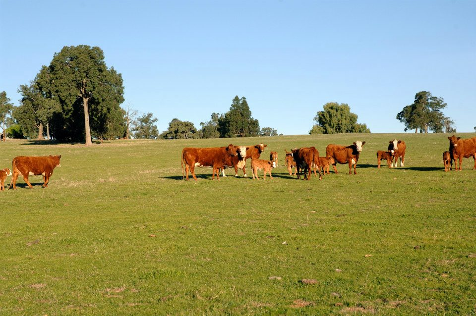 Wundowie - Land For Sale - 22623025 - Acton Southandvictoriapark