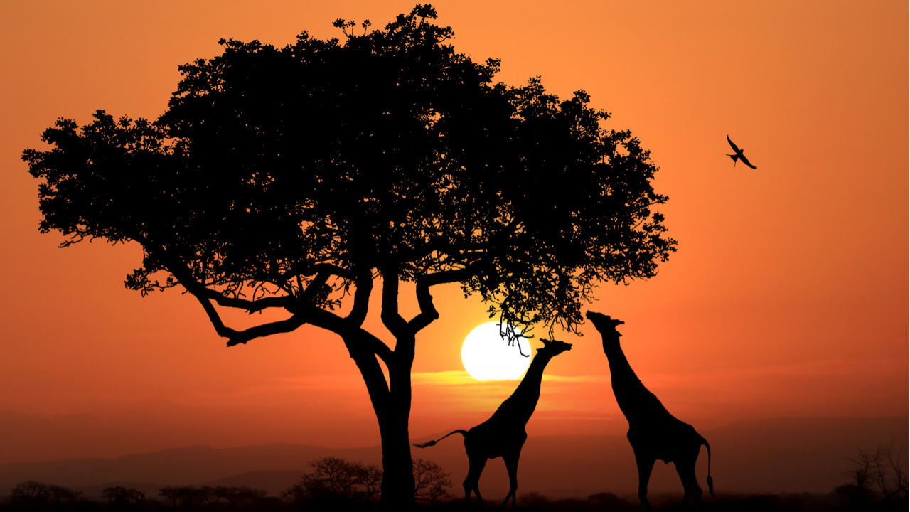 8 Day Essential South Africa – Save $500pp
