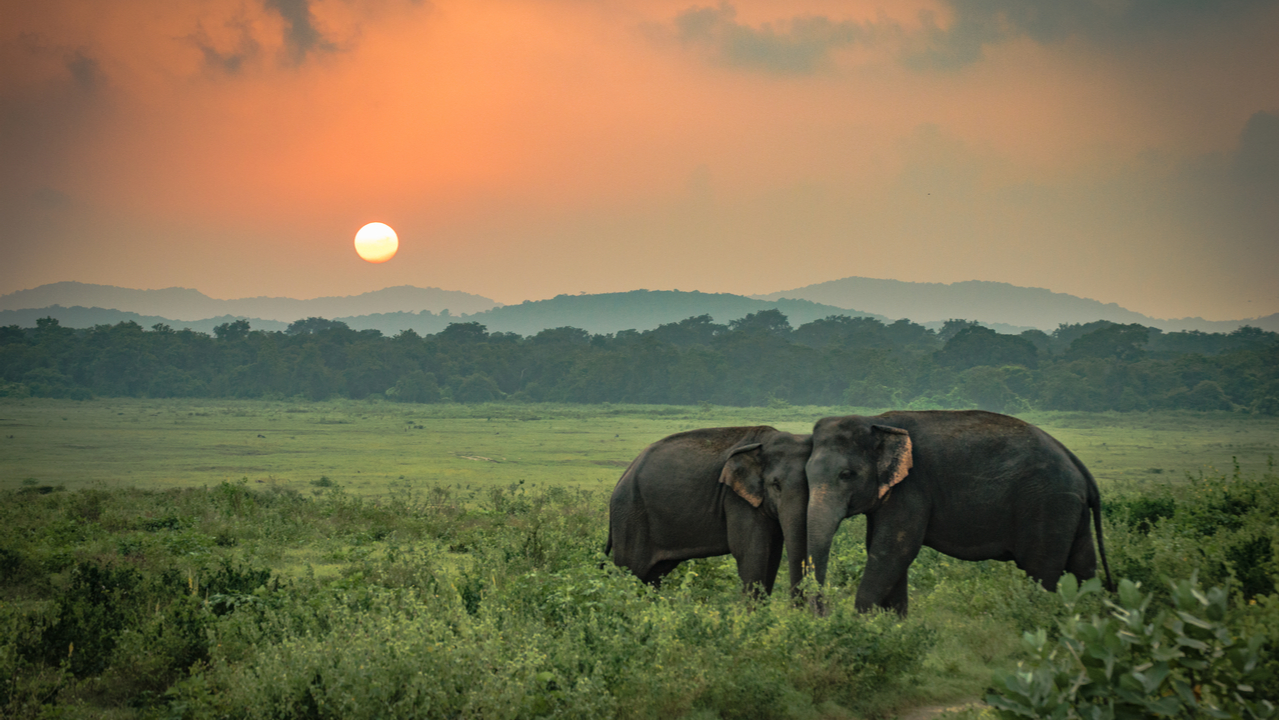 13 Day Treasures of Sri Lanka – Save Up to $210 pp