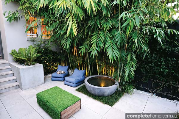 Lj hooker real estate real backyard inner city for Small shady courtyard ideas