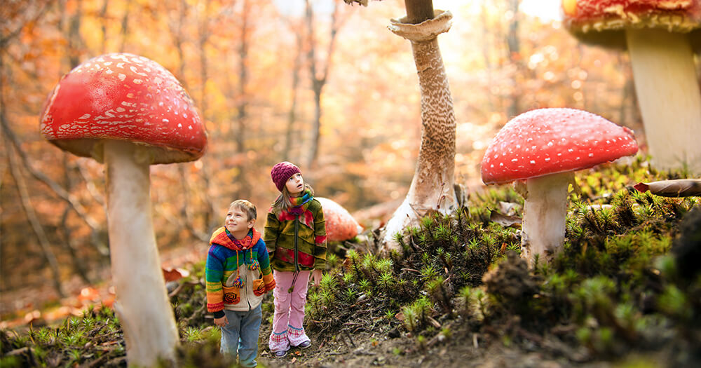 Graphic design enhancements made to photo of children in a mushroom forest