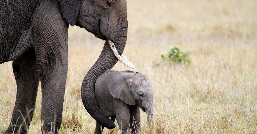Zookeeper-Zookeeping-Elephant
