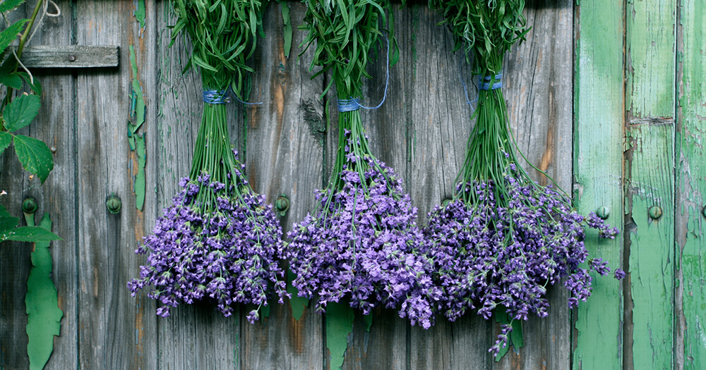 Lavender oil is an essential oil