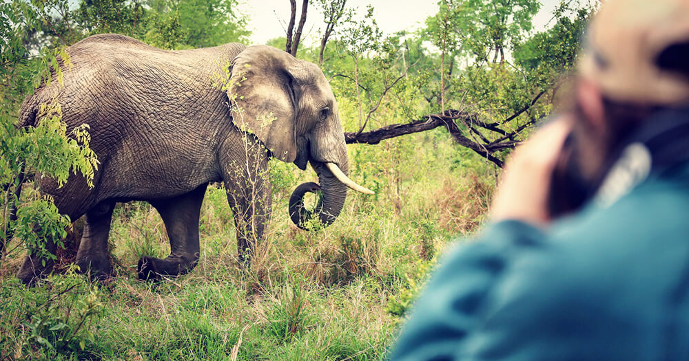 Travel photographer and journalist capturing photograph of elephant