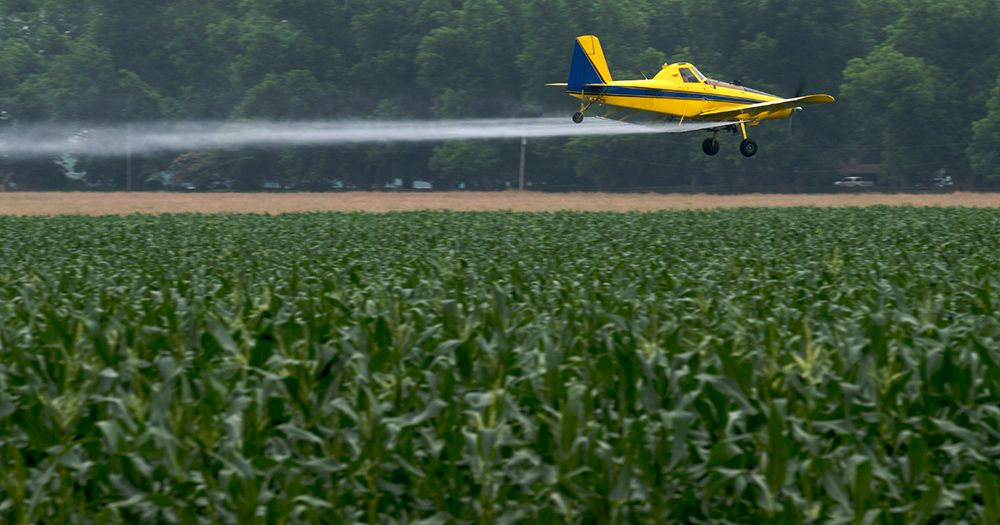 Crop duster on cornfield