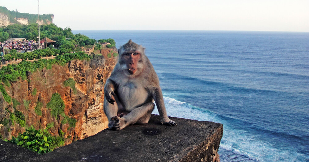 Indonesia, monkeys