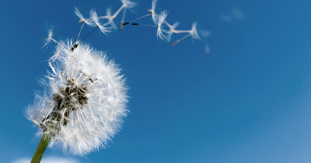 Stop the fear of failure because life isn't forever, like this dandelion blowing gently in the wind with a blue sky background