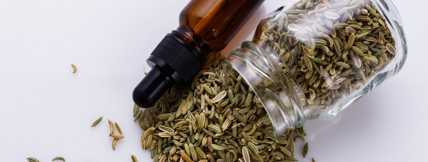 Fennel For Increasing Milk Supply: Does It Really Work