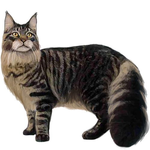 Maine Coon - Full Breed Profile