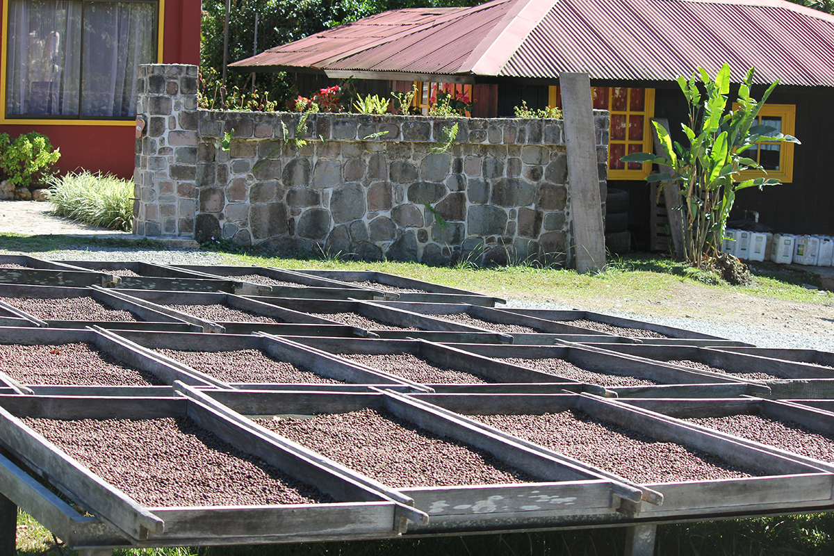 African Style Drying Beds in Panama