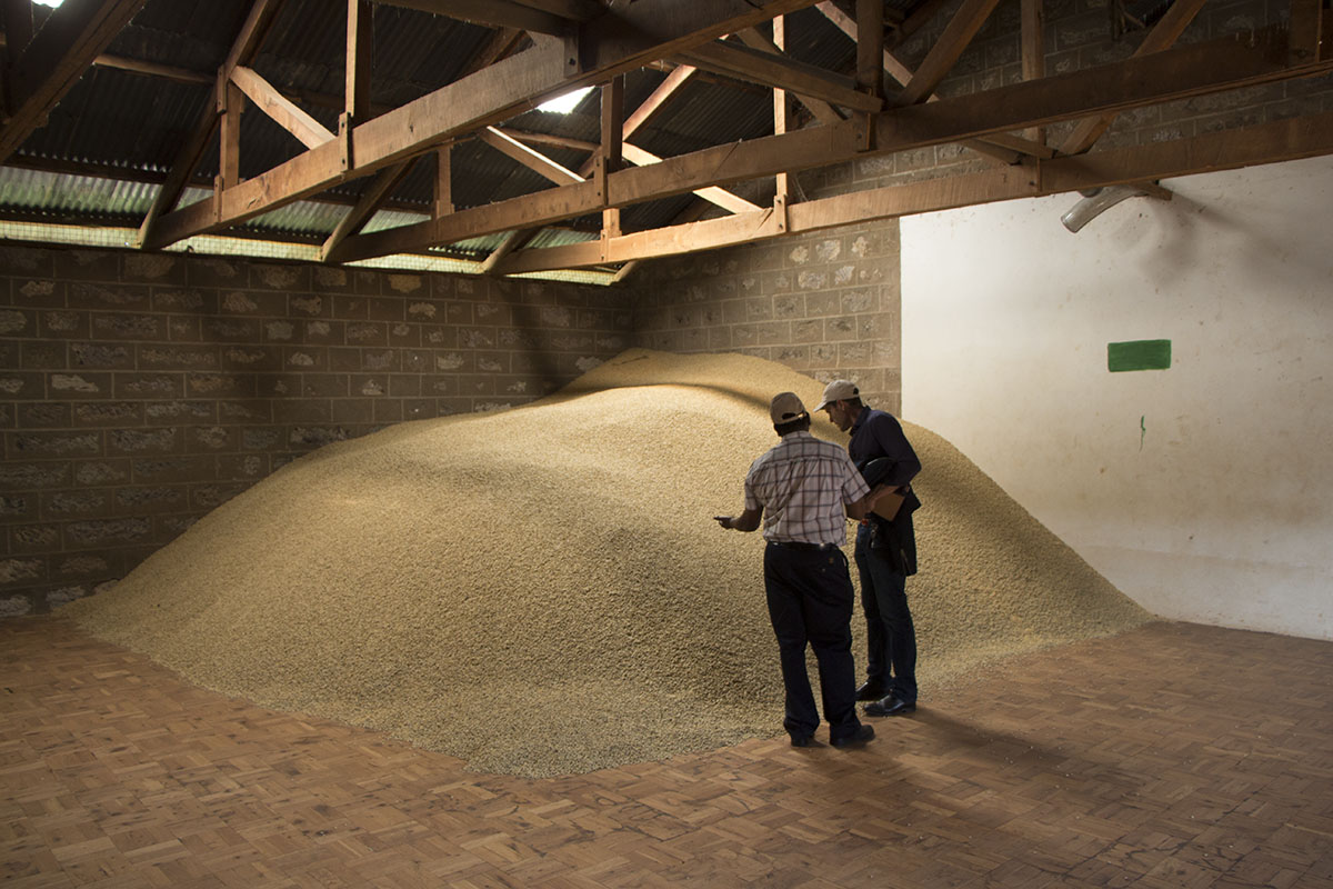 Coffee At a Mill in Kenya