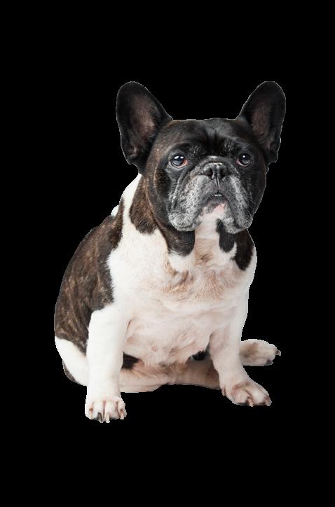 Bentley | Studio Mascot