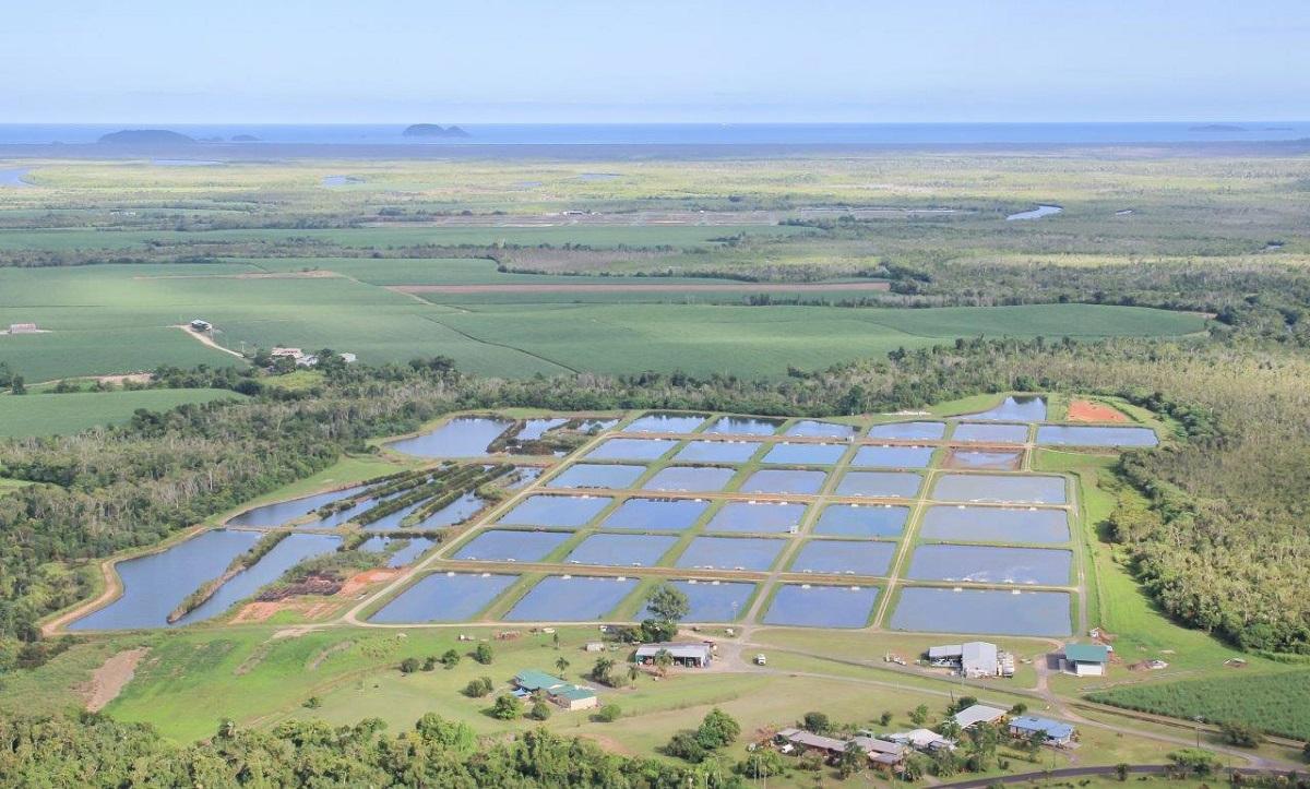 Infinity Blue Barramundi farm - Photo Credit Vital Photography