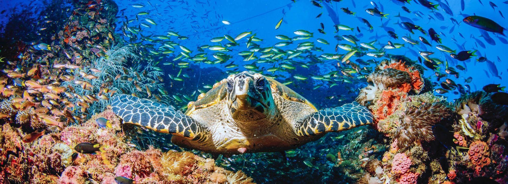 Mid-Week Reef Escape