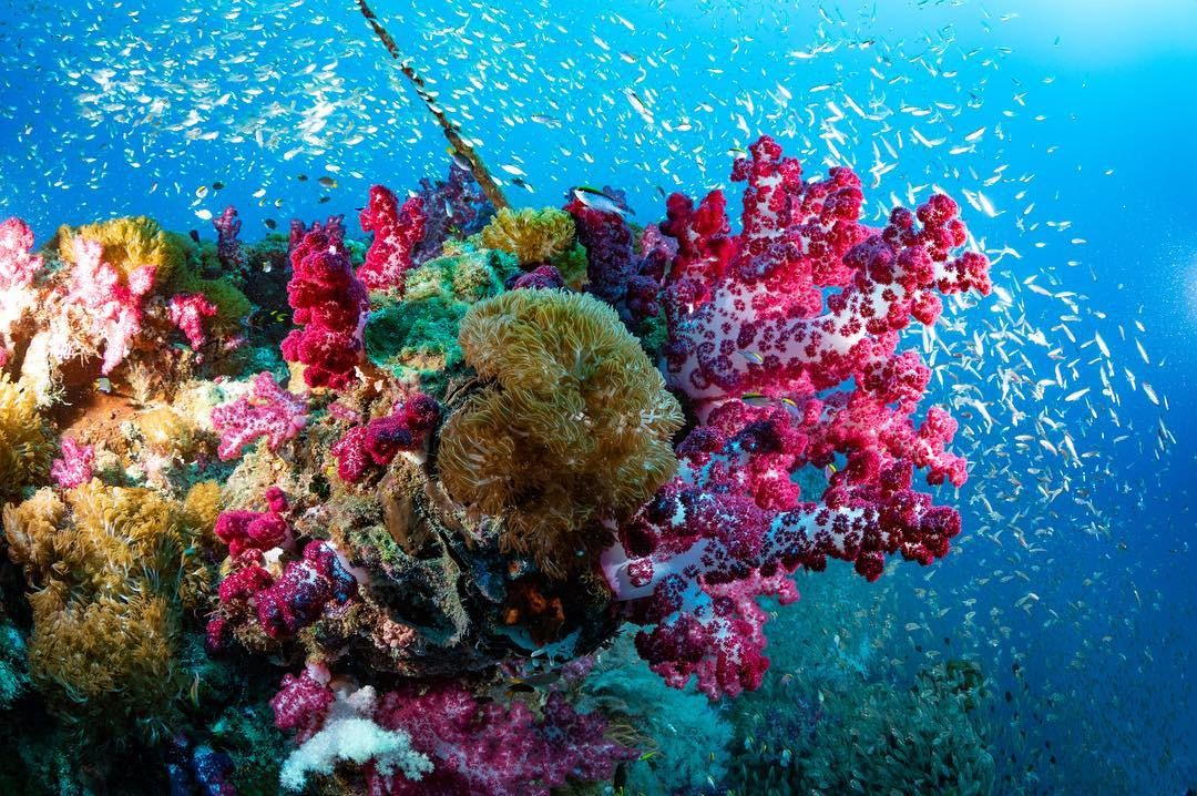 Great Barrier Reef Image