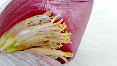 Tasty banana flowers but take time to prepare