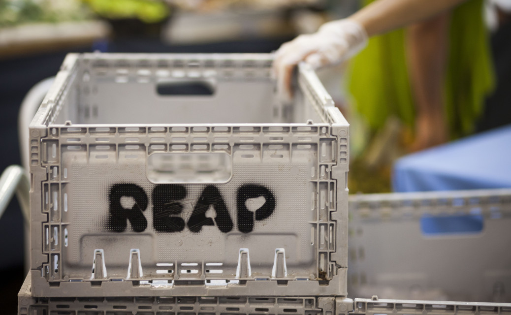 Thanks to the Sustainability Grant from the Cairns Regional Council, REAP collect their produce in pack flat crates.