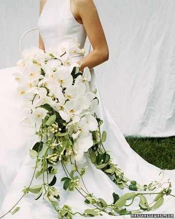 a99587 fal02 orchidcvr xl White Wedding Flowers
