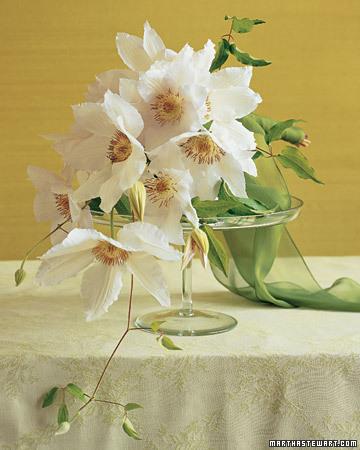 wa103269 fa07 clematis xl White Wedding Flowers