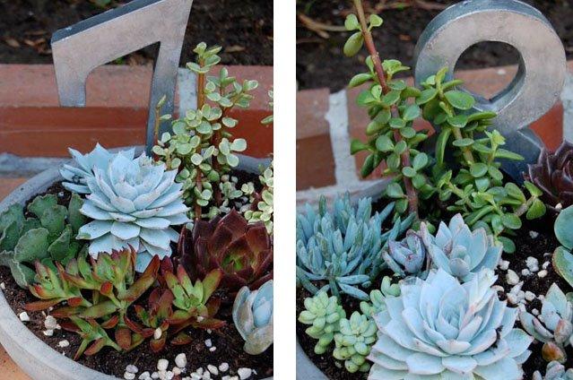 succulentpots 4 Stunning Succulents