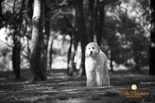 talia-and-elan-milkandhoneyphotography003