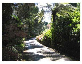 Secret-Garden-Southern-Highlands-Fountaindale-Grand-Manor