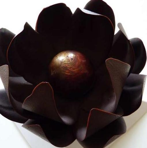 Unveiling The Chocolate Flower
