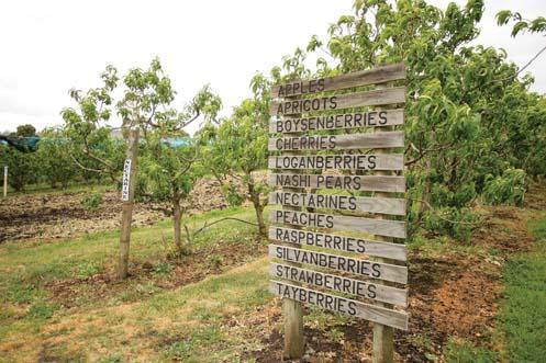 sorrell-fruit-farm-resize