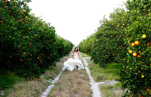 orange-grove-bridal-shoot012