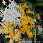 sunshine-yellow-bouquet3