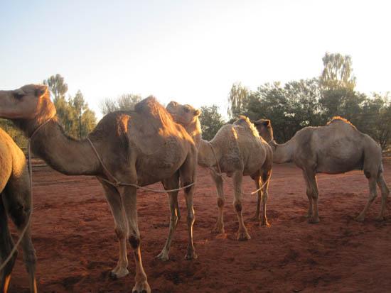 Uluru Honeymoon0008 Uluru – The Outback Honeymoon