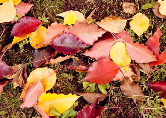 Autumn Engagement Shoot032 Tatiana and Jamies Autumn Engagement Shoot