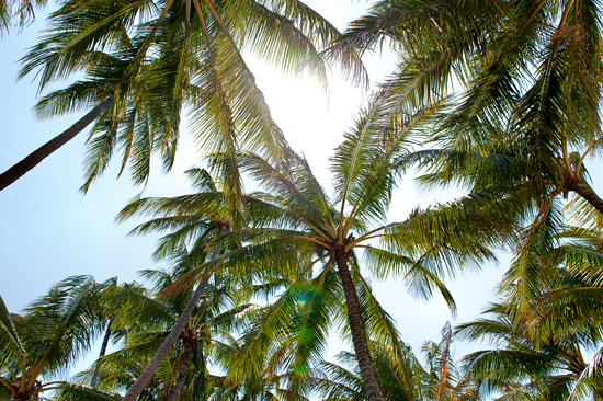 palm cove destination wedding025 Sarah and Ruans Palm Cove Destination Wedding