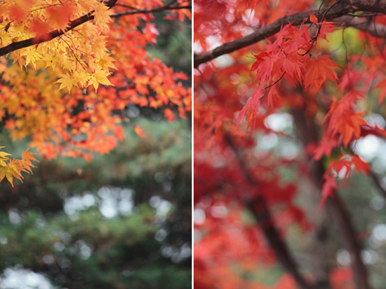 autumn leaves engagement014
