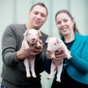 engagement shoot with piglets