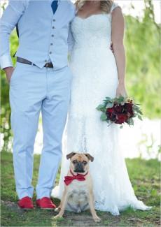 wedding_dog