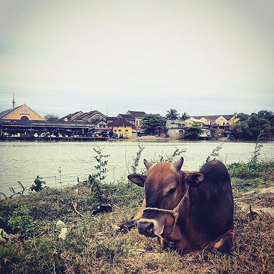 005 Real Honeymoon In Vietnam