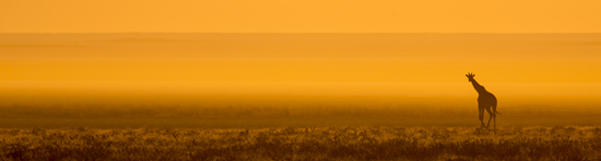 Giraffe Etosha Namibia A Wedding Cinematographers Journey To Africa