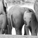 elephants drinking Etosha Namibia 125x125 Friday Roundup