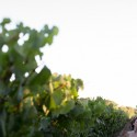 sonoma valley wedding036