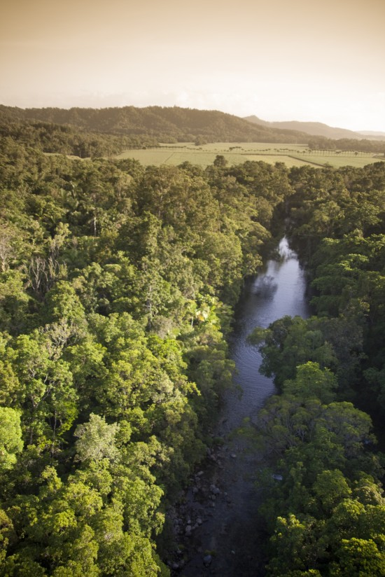 Silky Oaks aerial 550x824 Eco Love In The Daintree