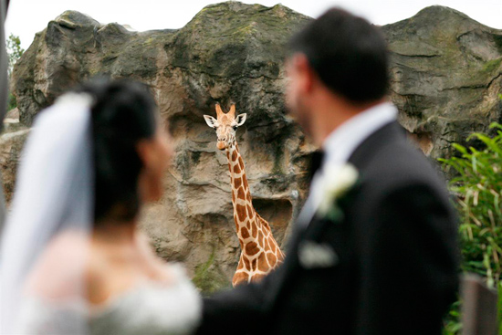 formal taronga zoo wedding39